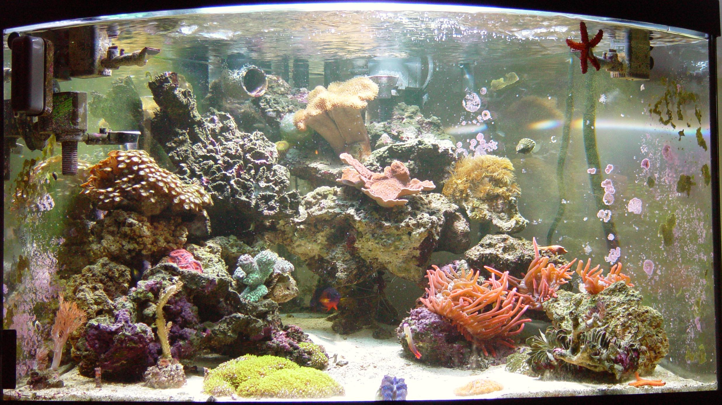 Saltwater Reef Tank: Don and Laura Geddis